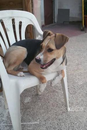 Regalo cane femmina di 5 anni
