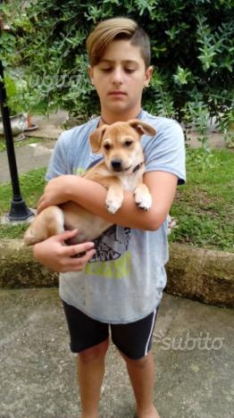 Regalo cucciola di due mesi salvata da morte sicur
