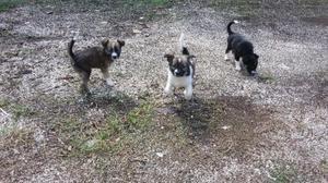 Regalo cuccioli razza meticcia