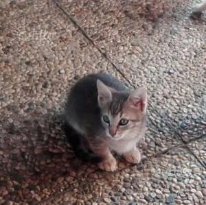 Regalo gattini di 2 mesi