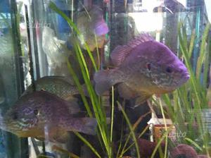 Laghetto per pesci e tartarughe posot class for Termostato tartarughe acqua