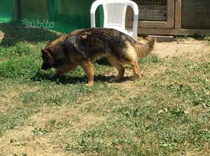Regalo cane di razza meticcia