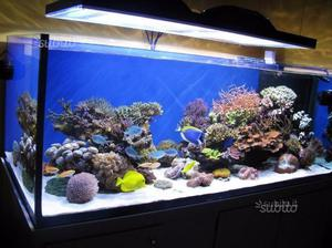 Acquario marino 500 litri