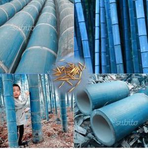25 Semi di bamboo,gigante varie Specie