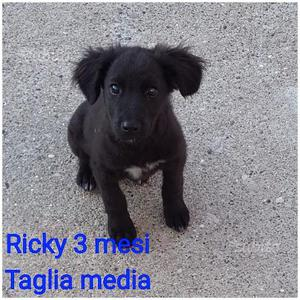 Ricky 3 mesi