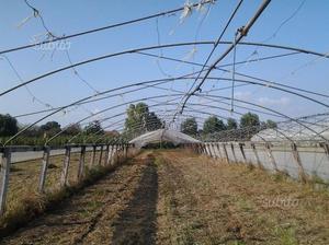 Serre mt. 8 x 60 con impianto irrigazione