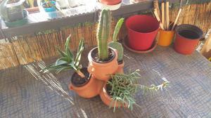 Lot.n.42 xx Vaso in terracotta con 4 piante grasse