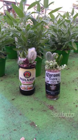 Composizione piante grasse posot class - Vasi con piante grasse ...