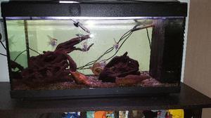 Acquario acqua dolce posot class - Mobile acquario ikea ...