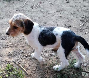 Regina, cane 4 mesi, taglia media