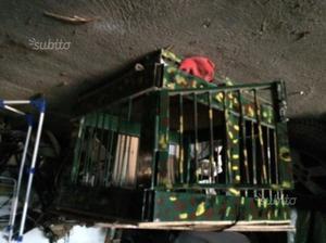 Cassetta trasporto cani