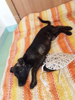 Adozione cane cucciolo maschio 3 mesi