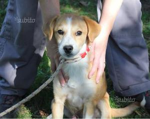 Bristol cucciolo taglia piccola in adozione