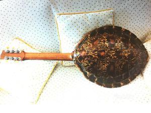 Guscio tartaruga posot class for Tartaruga orecchie rosse prezzo