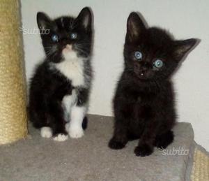Gattini disponibili da subito