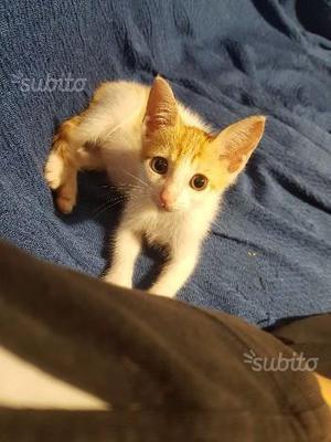 Gattino di circa due mesi