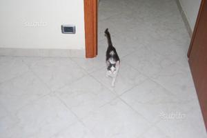 Gattino di tre mesi dolcissimo