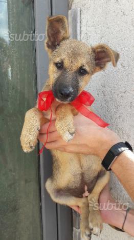 Lana.dolce cucciola di 3 mesi