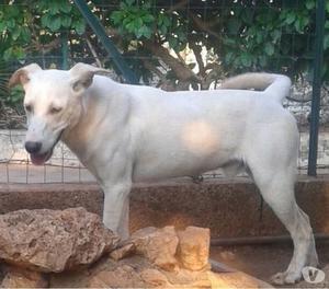 Blanco, cane bello dentro e fuori. Cerca famiglia amorevole