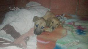 Regalo cucciole