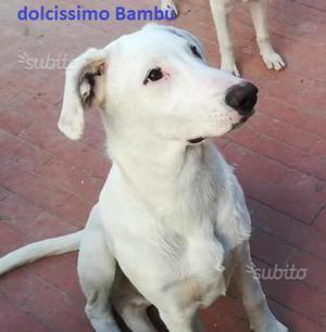 Bambù, cucciolo in adozione