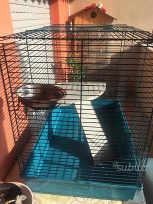 Gabbia X pappagalli
