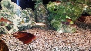 Mb mi acquario fondo inerte ghiaia nero circa posot class for Fondo per acquario