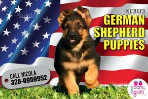 Pastore tedesco cuccioli pedigree-german shepherd