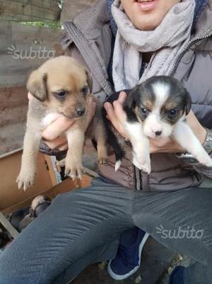 Regalo cuccioli (taglia piccola)