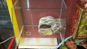 Teca per tartarughe, in vetro