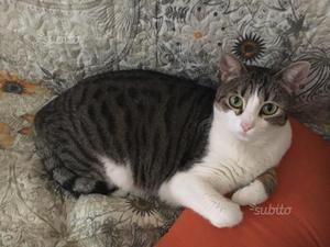 gattina 2 anni