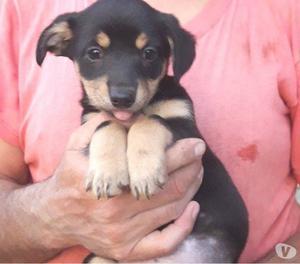 Penny, dolce cucciola di 2 mesi in cerca di affetto