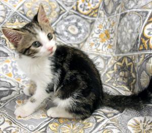 Mickey gattino cucciolo 5 mesi
