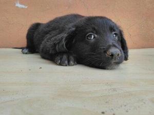 REGALO una piccola cagnolina
