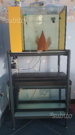 Cubo riproduzione discus - Vasca per accrescimento