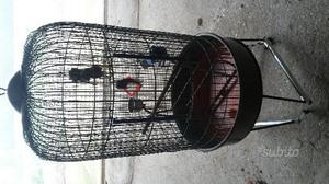 Gabbia per papagallo e uccellini
