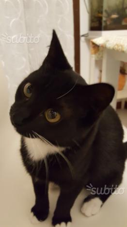 Gattino nero e bianco