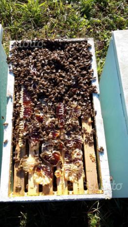 Nuclei sciami api aperte prenotazioni