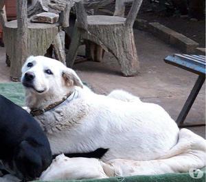 Nuvolo, un cane speciale in cerca di adozione del cuore
