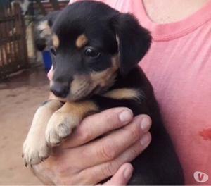 Penny, dolce cucciola di 2 mesi vivace e allegra