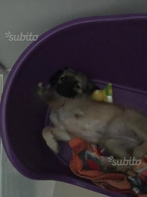 Regalo cucciola di 4 mesi