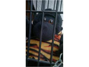 Robot Pupazzo Gorilla King Kong elettronico in gabbia