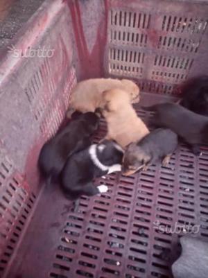 7 cuccioli da adottare
