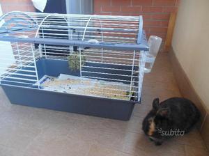 Gabbia coniglio palla fieno vaschetta acqua posot class - Lettiera coniglio nano ...