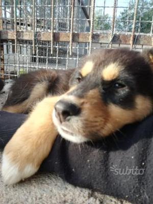 In regalo cucciolo di due mesi