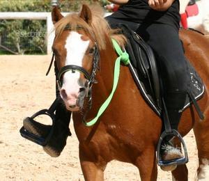 Pony olandese ludico /élite under 12