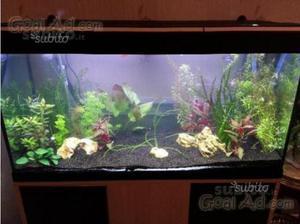 Acquario askoll tenerif visus 295 posot class - Mobile acquario ikea ...