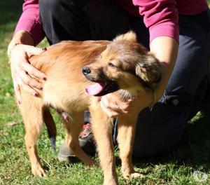Reggie cucciolo 5 mesi taglia piccola