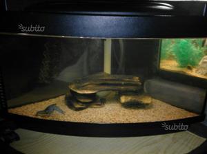 acquario sera space angolare con vetro sferico posot class