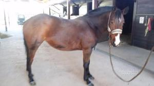 Pony 4 ANNI